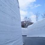 寒さに負けず・・・  BY都立大学支店